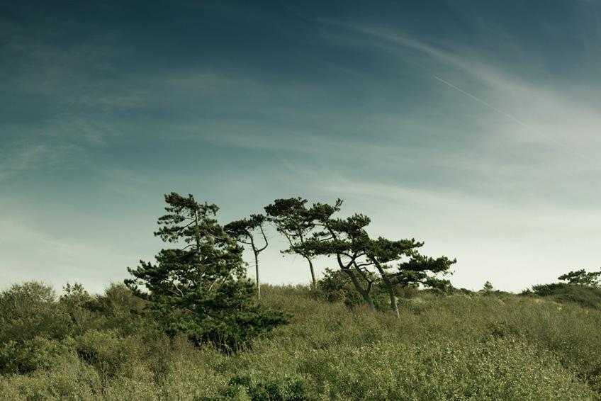 Tona landskapsbilder i grönt och blått och få det flott